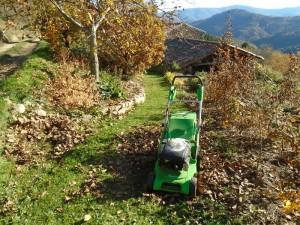 walnut mowing