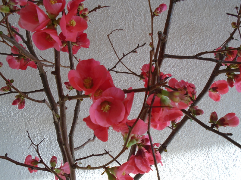 quince detail