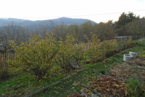 Winter pruning in the soft fruit orchard