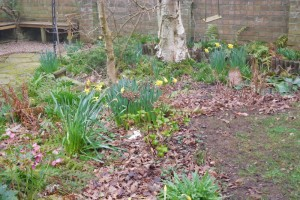 A woodland garden in spring