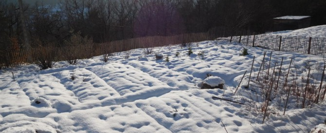 The potager in spring