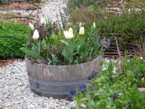 tulipspotage1
