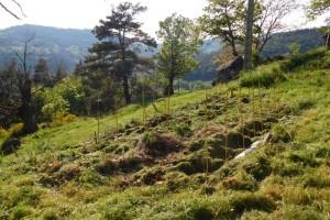 Grass cuttings as mulch
