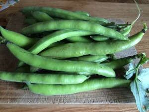 firstbroadbeans1