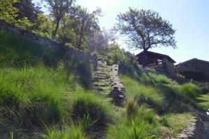 Eragrostis grasses and garden design