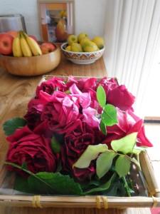 roseharvestvertical