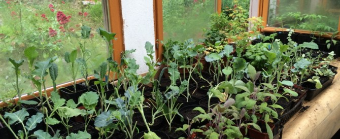 Early summer in the potting shed
