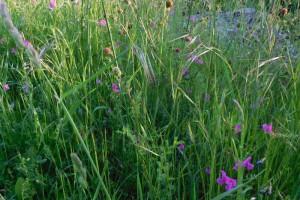 Creating wildflower meadows