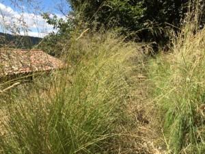oakgrasses