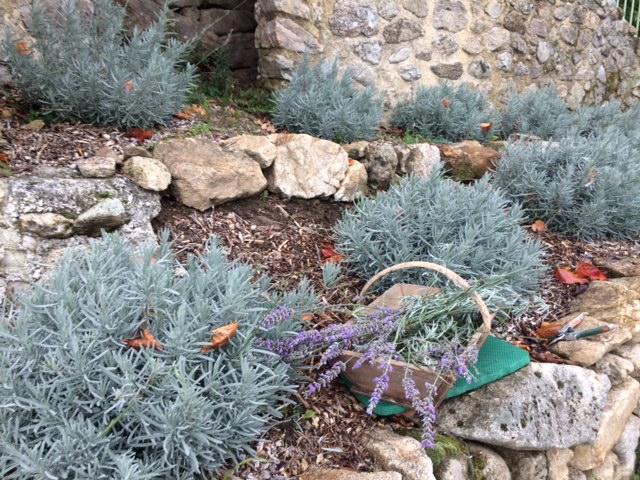 lavendernovember