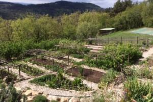 Mulching the vegetable garden