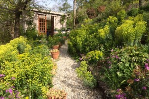 Garden design with euphorbias