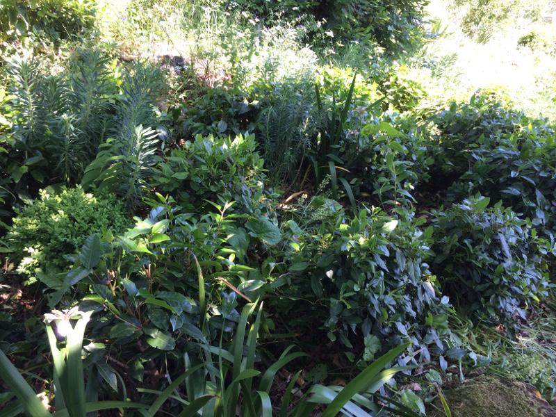 shrubspruned