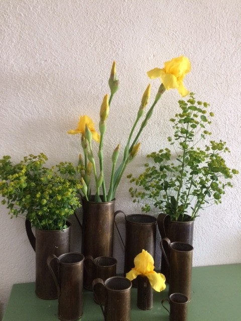 yellow iris pot