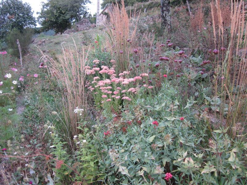 flowersterrace