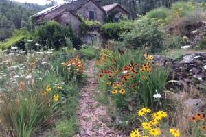 A garden visit