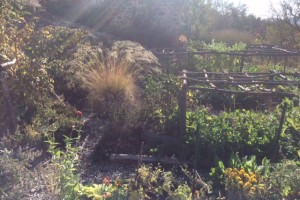 Autumn in the potager