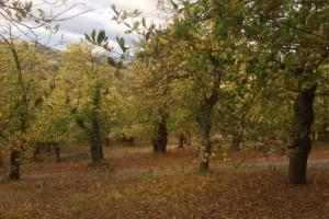 Chalencon chestnut festival
