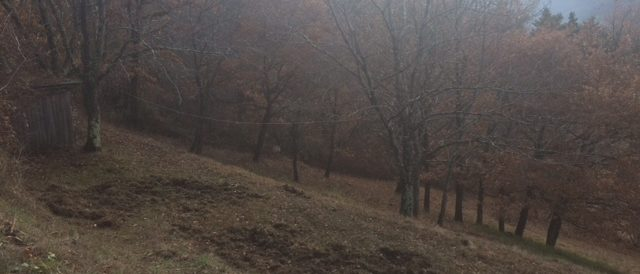 Wild boar landscaping