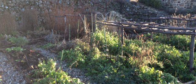 Unwanted weeds