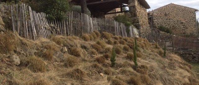Planting Italian cypresses