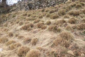 More grass cutting