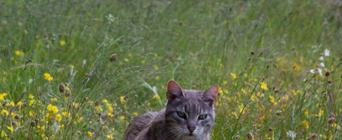 Farewell garden pest