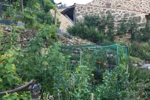 The potager in summer