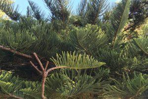 Choosing the correct trees