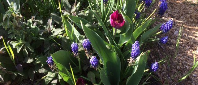 A little springtime surprise