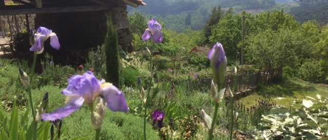 The second iris flush