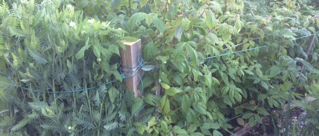 Girdling the vegetable garden
