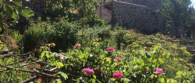Summer in the cutting garden