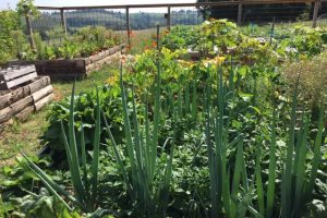 Visiting a permaculture garden