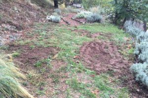 Wild boar in the garden?