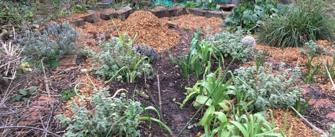 More permaculture beds