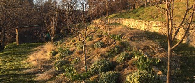 The final ornamental grasses cut back