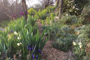 Springtime images in the Shade Garden