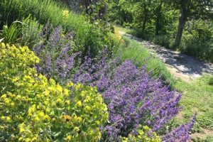 Summer shrubs