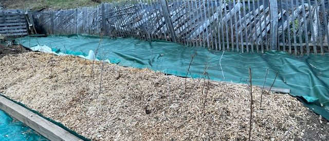 Mulching permaculture beds