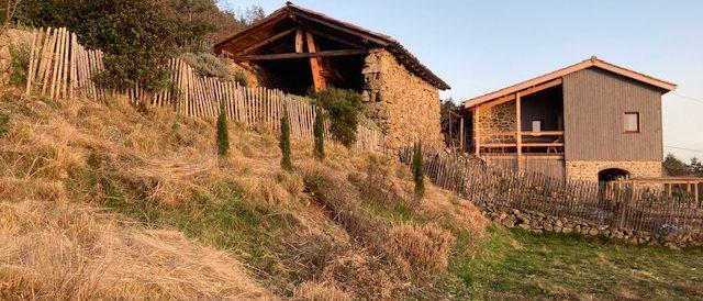 Cutting back ornamental grasses