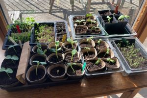 Early spring seed sowing