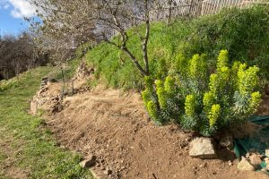 Reviving a neglected garden area