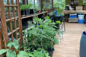 The last potting shed crops