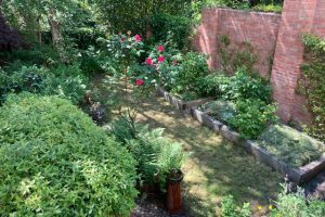 Taming a woodland garden