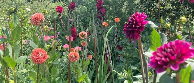 A cut flower garden in pictures